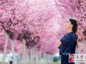 三月的汉中,一半是花海;,;一半是美女。