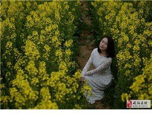真美汉中,120万亩油菜花海竞相开放!