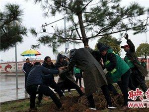 宝丰县园林局冒雨施工完善火车站广场绿化景观