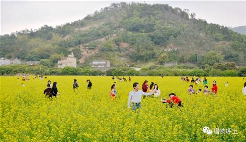 坪上镇湖光村的油菜花,现在竟然是这样子了!