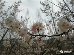 【春�砹恕� 沁�@春・古�之春 | 如�袅睢だ�山��