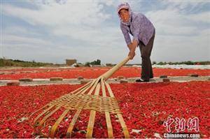 """中国柴达木盆地""""小枸杞""""已成""""大产业"""""""