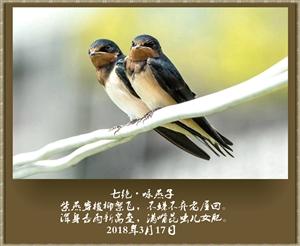 七绝・咏燕子