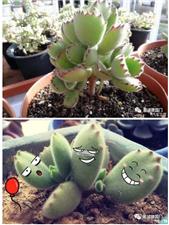 阳春三月,【建国门】――――周末亲子主题 植物DIY