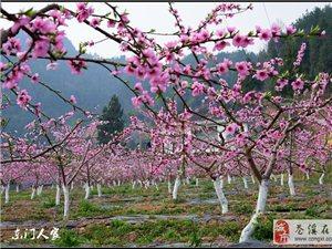 【苍溪】桃花源里处处春【图】