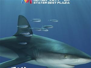 听说苍溪有鲨鱼出没???