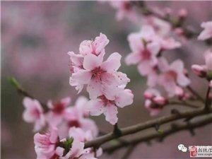 听说明天寨英!水源村有个桃花摄影大赛!