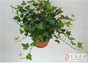 哪些绿植吸收甲醛?