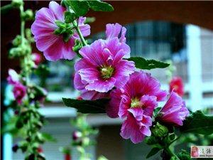 院内《那朵花》