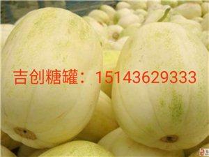 吉林省镇赉县重要气象信息――――瓜农育苗的看看吧