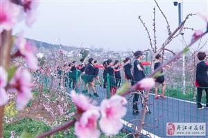 """相约丹江口习家店农博园""""三花节""""的花絮"""