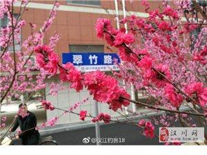 赏花何须去武大,川城美景观不暇!