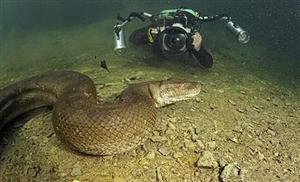 别以为世界上最大的蛇是蟒蛇,你还没见过它
