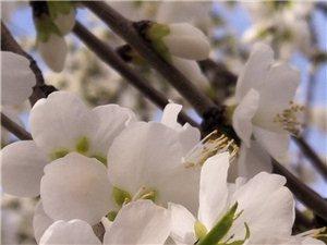 �p花――春色(一)