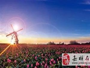 济宁首届国际花海美食狂欢节,3月31日开幕!领福利!