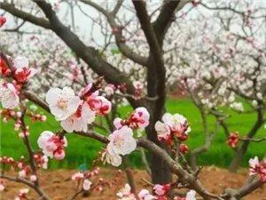 ?/tieba/2018年威尼斯人注册首届桃花节摄影大赛将在这里举办!!