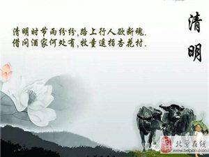 清明节的来历和习俗介绍