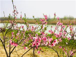 澳门博彩正规网址处女泉的芦苇与花香,这一波最新的春光美景图带你走