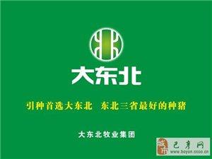 【巴彦网】巴彦县大东北牧业集团董事长关明礼被评为全国农业劳动模范