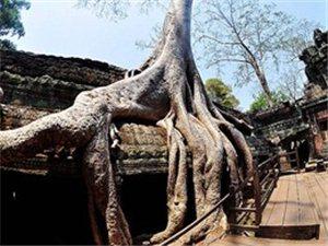 柬埔寨古迹――塔普伦寺