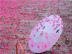 昨天的雨有些暴力 打落了藏在昆明人心里的花