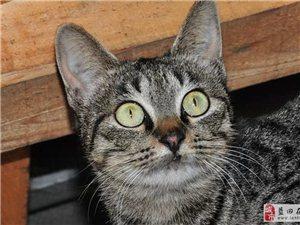 【老秦人 摄影】大眼传神的猫咪,萌萌哒