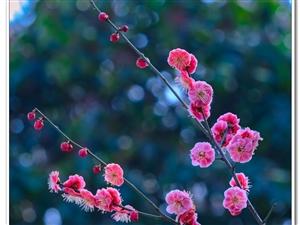 春来了、花儿开了