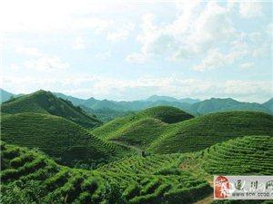 遂川茶山航拍:茶�~富了百姓