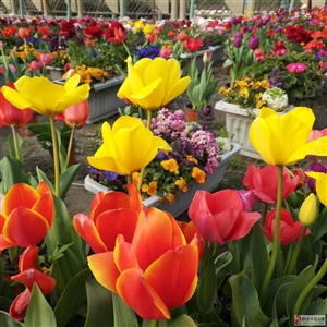 春天�砹耍�喝茶和春暖花�_更配哦