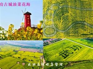 第三届中国武功古城油菜花节:畅游花海体验民俗