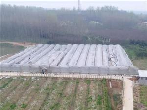 【走近】第17期:历时3年,他把500亩荒地打造成了潢川人的梦想果园!