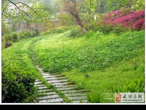 【绿野书院】清明柳――韩静