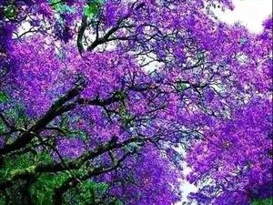 【绿野书院】韩静分享:漫步人间四月天,心灵释然醉花间