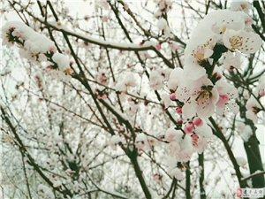"""建平的一场""""桃花雪"""",惊艳了整个春天!美哭太多人!"""