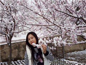 """兴发娱乐的一场""""桃花雪"""",冷艳了整个春天!美哭太多人!"""