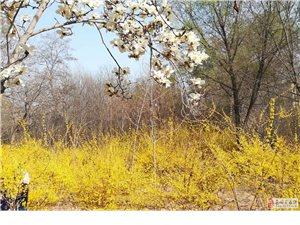 清明|正是春光最盛�r  桃花枝映李花枝