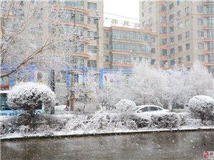 美丽大桦南――-又下雪了