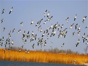 新疆克拉玛依的水鸟