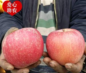 爱心接力 ▏急急急 临猗苹果大量滞销 果农无助紧急求援
