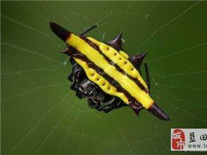 【老秦人  摄影】游山玩水长见识――蜘蛛!!