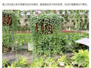春天了,这10种花草别买,捡个枝叶插土里,猛长一大盆!