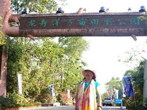 琼海龙寿洋万亩田野公园之千亩花海娇艳海南