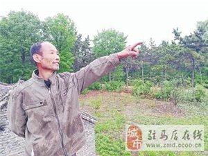 泌阳57岁窦庚岑25年守护一片绿:每棵树都是自己的心肝宝贝