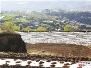 走过张家川的山山水水,陶醉在夕阳西下的菜籽花地