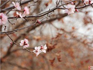 扎�特的春天(小�悠�)