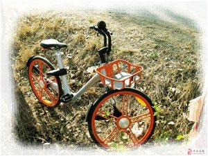 共享单车抛停野外多日无人骑,抛车人员无良无德不仁又不义。