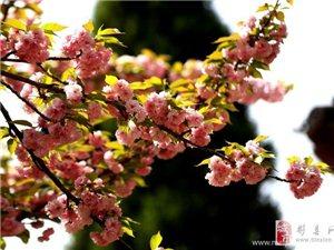 春天到了,景色宜人,拍照走起……