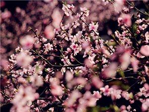 腴地千亩桃花竞相开放,简直美翻了,你不来看看吗?