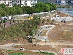 【苍溪】城区段河边绿化成林【图】