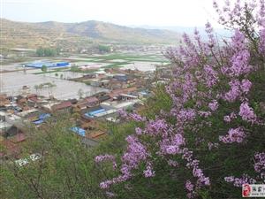 中国大关山摄影俱乐部第十五次采风活动拍摄紫丁香